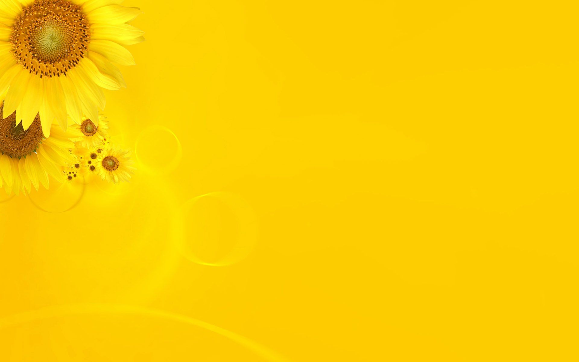 Yellow Color Flowers Wallpaper The Color Yellow Pinterest
