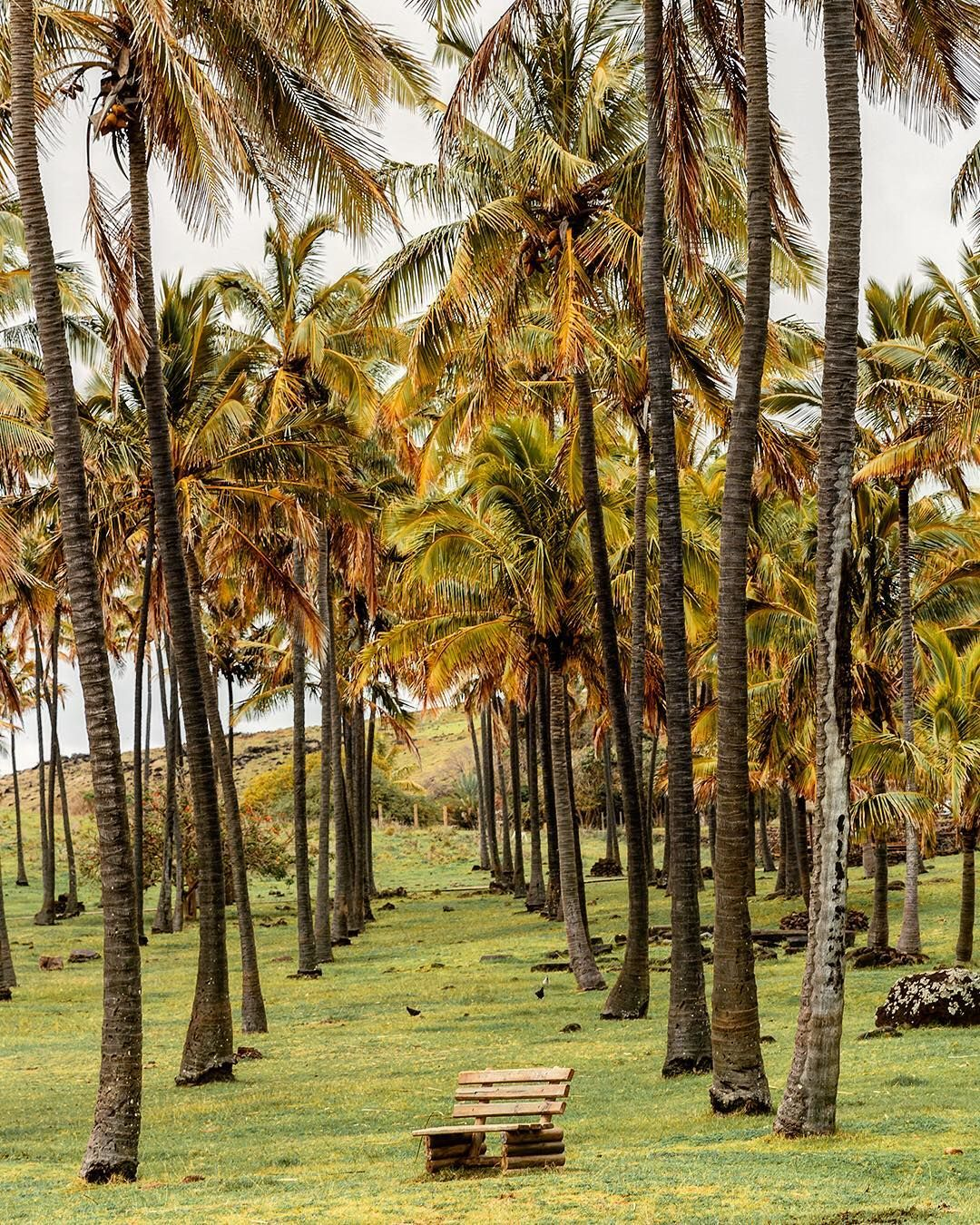 Easter Island Beaches: Follow The Palm-tree Lined Path To The White Sands Of This