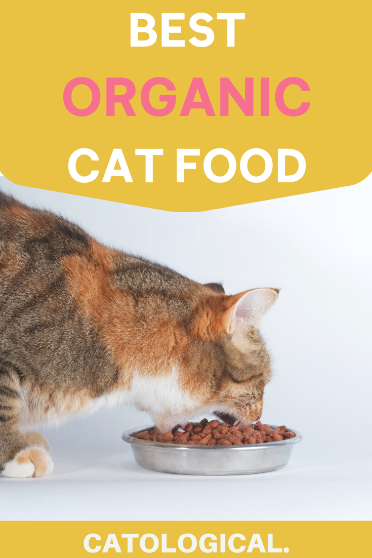 Best Organic Cat Food For Natural Wellness Wet And Dry Brand Reviews Organic Cat Food Cat Food Natural Cat Food