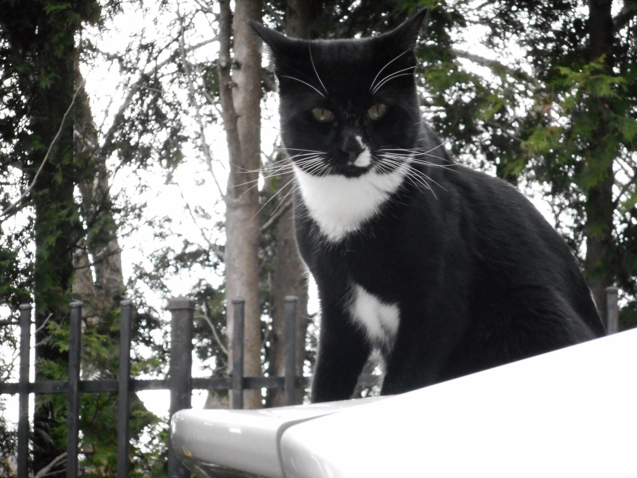 Pin by Sharon Boulanger on Lost Cats CT Cats, Humane