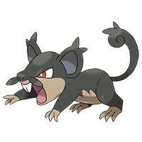Pokémon Soleil / Lune : un Rattata d'Alola et un Goinfrex spécial