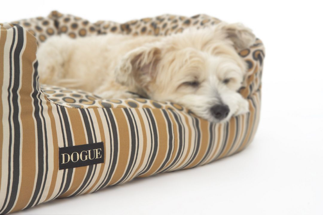 Shhhh..very busy | Luxury dog, Dog boutique, Dog grooming