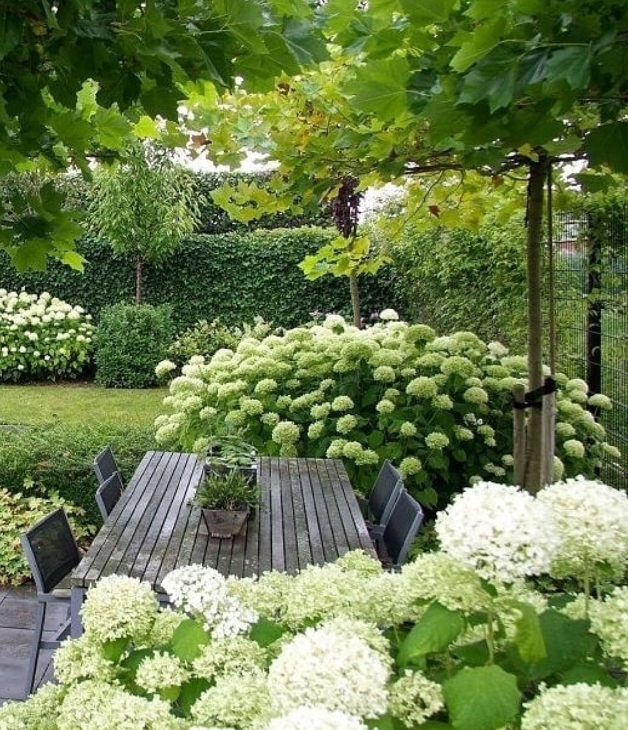 pflanzplanung hortensien f r eine lange bl te im garten. Black Bedroom Furniture Sets. Home Design Ideas