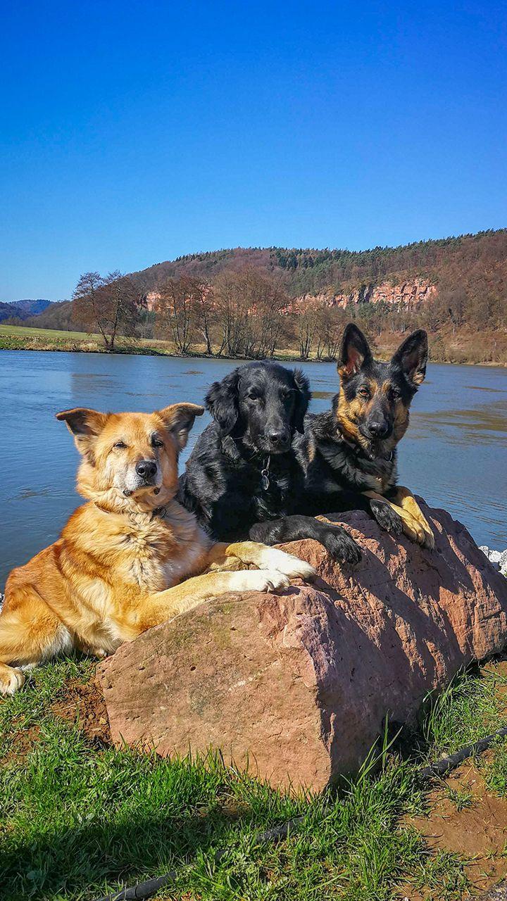 Wir Sind Aska Barney Ivy Wir Drei Sind Wochengewinner Der Hundeapp Appmal Hund Hunde Startbildschirm