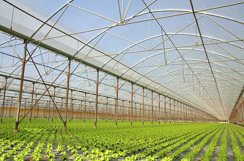 Clear Solar Cells Put The Green In Greenhouses By Making Them Zero Energy In 2020 Solar Cell Solar Sustainable Agriculture