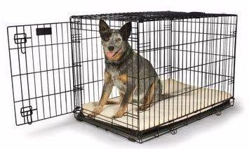 Petco Classic Dog Crate Dog Crate Wire Dog Crates Xxl Dog Crate