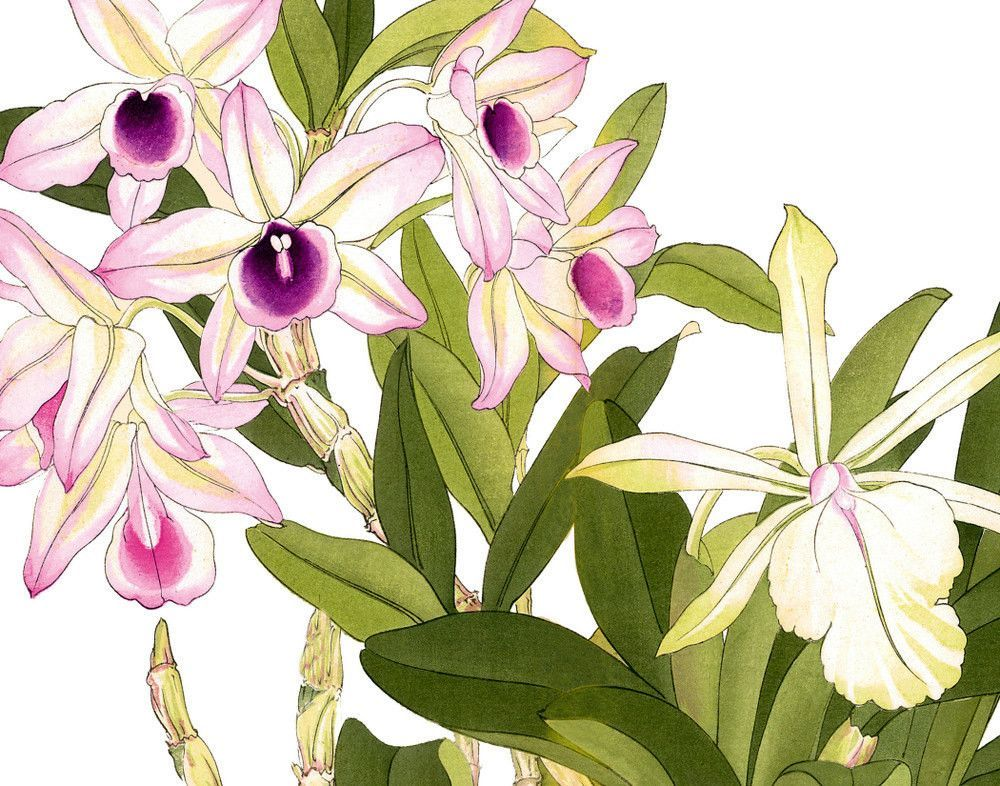Tropical Woodblock Orchids Botanical Print No.3 - Giclee Canvas Print