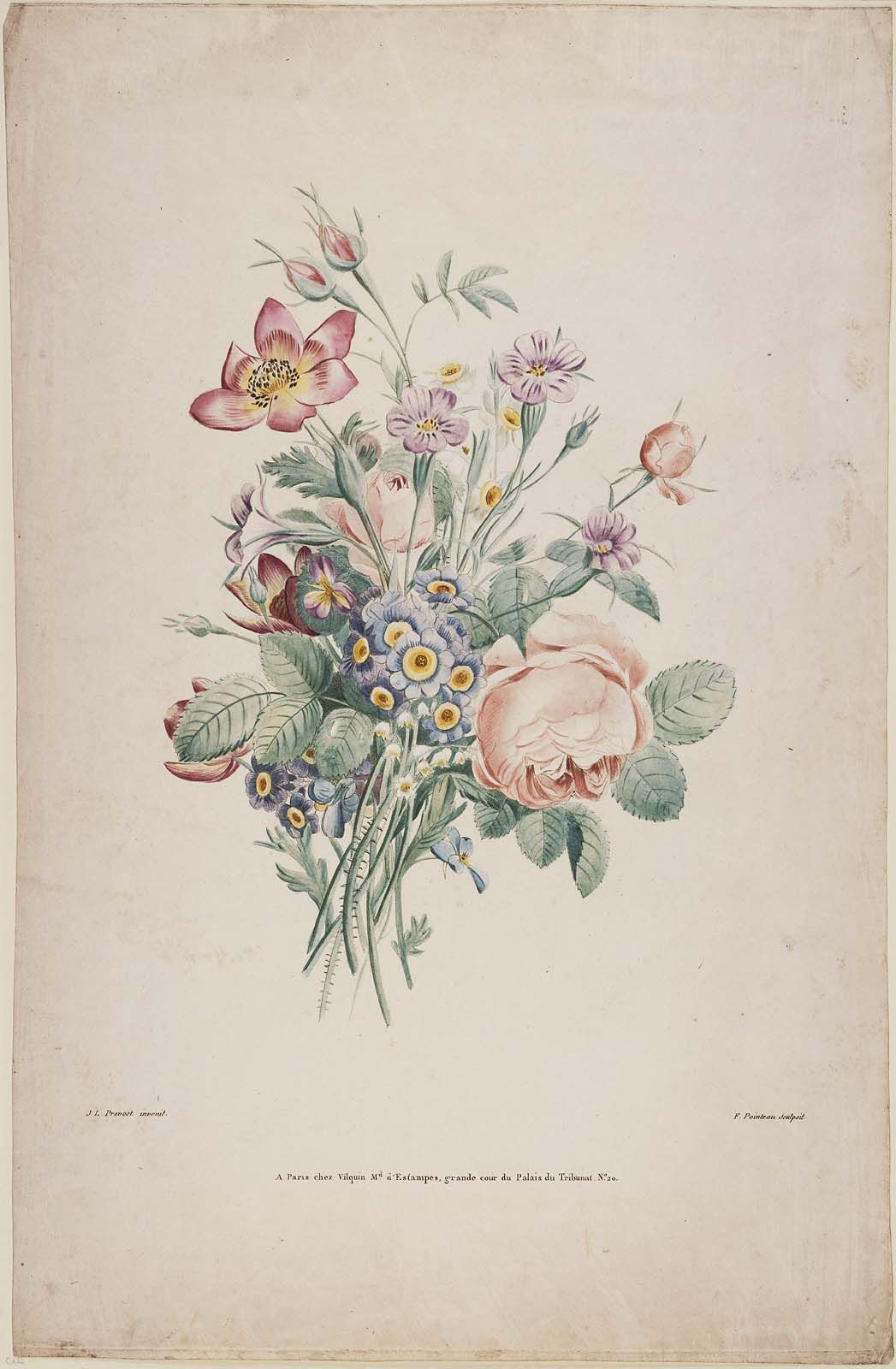 Bouquet With Pink Roses And Blue Auriculas Possibly A Proof