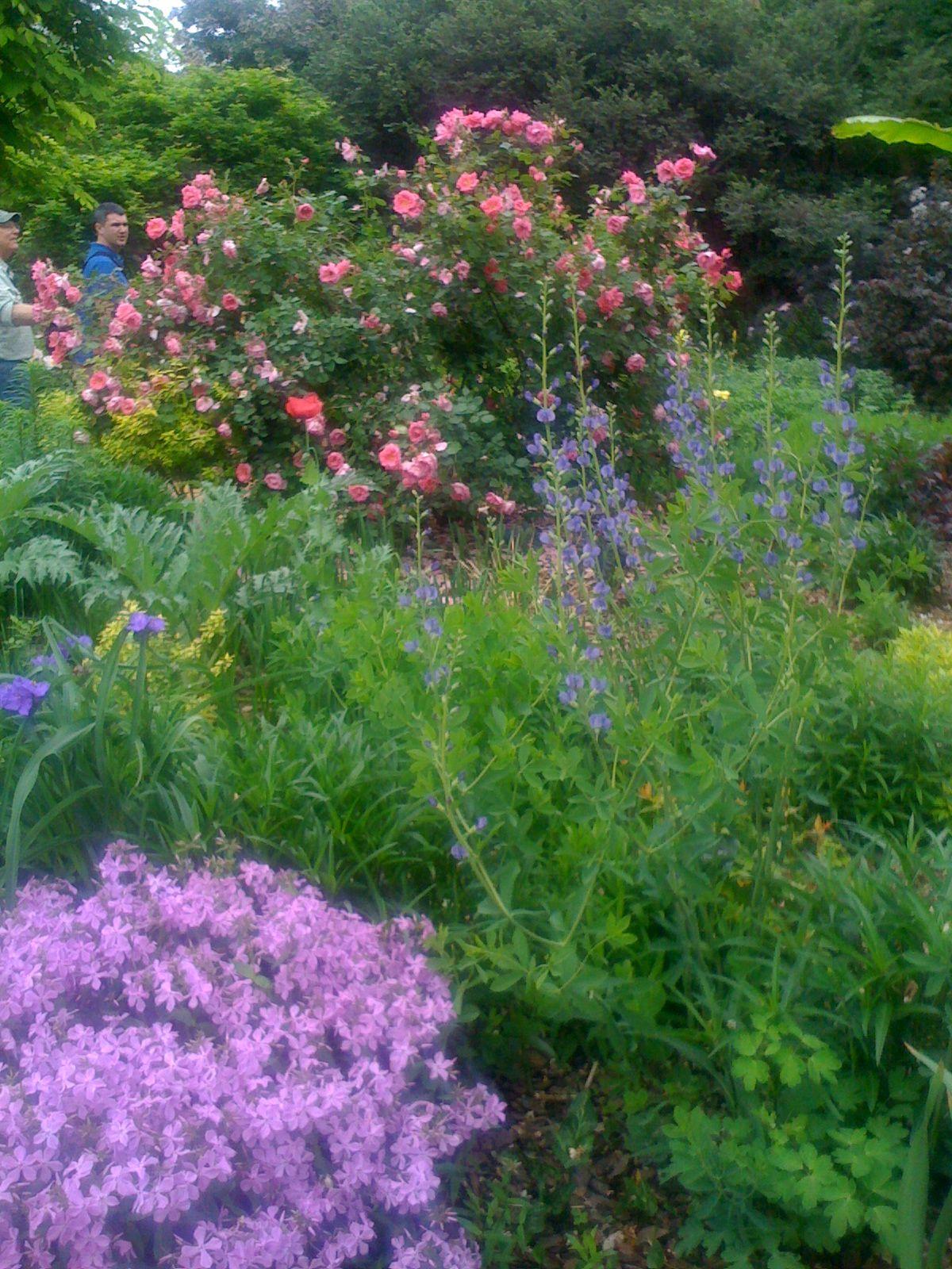 Flower Garden Color Schemes Landscape Designer Hendersonville Nc Colorful Garden Flower Garden Starting A Garden