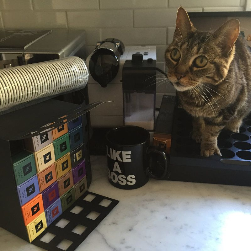 Mom, are you going to make me a cup too? #caffeinekitty   #afternoonpickup @NespressoUSA