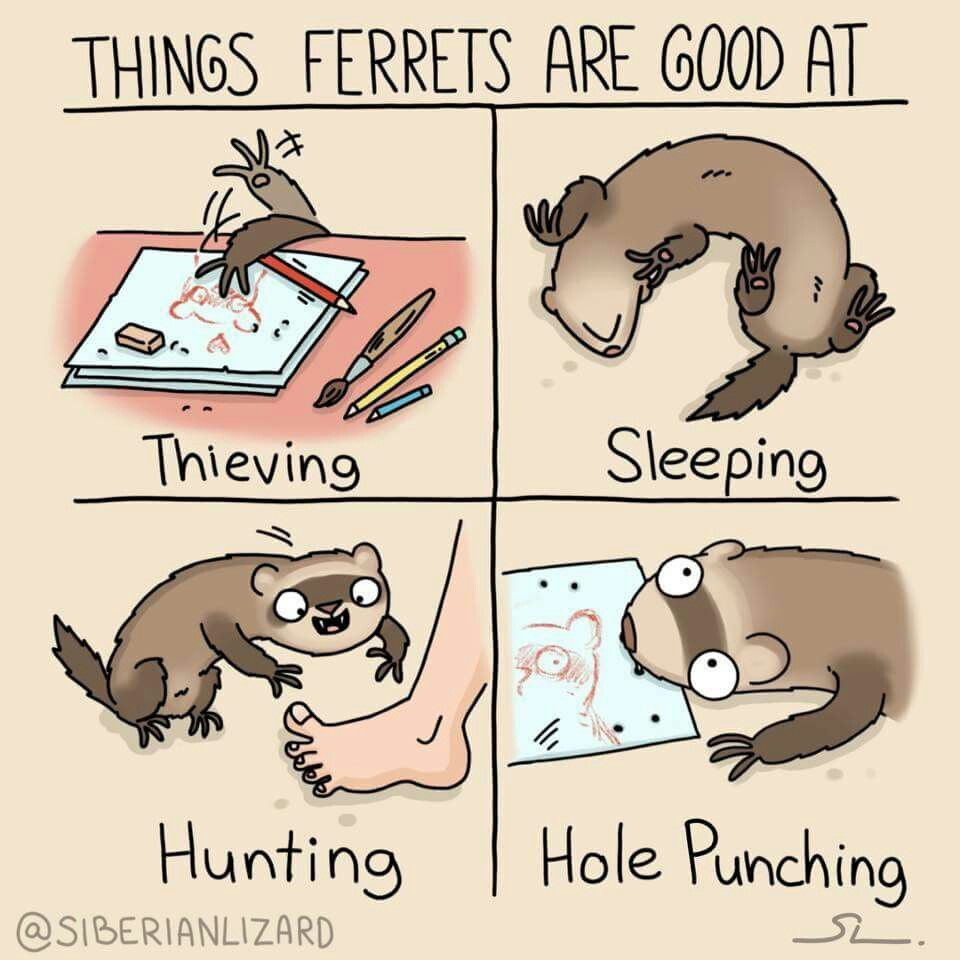 Pin by Ella Angela on Ferret Homes Sheds Ideas and Fun! | Pinterest ...
