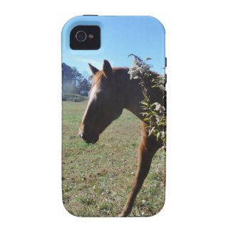 Brown Horse against blue sky iPhone 4 Cases