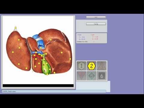 Bio-resonance Diagnostic - YouTube