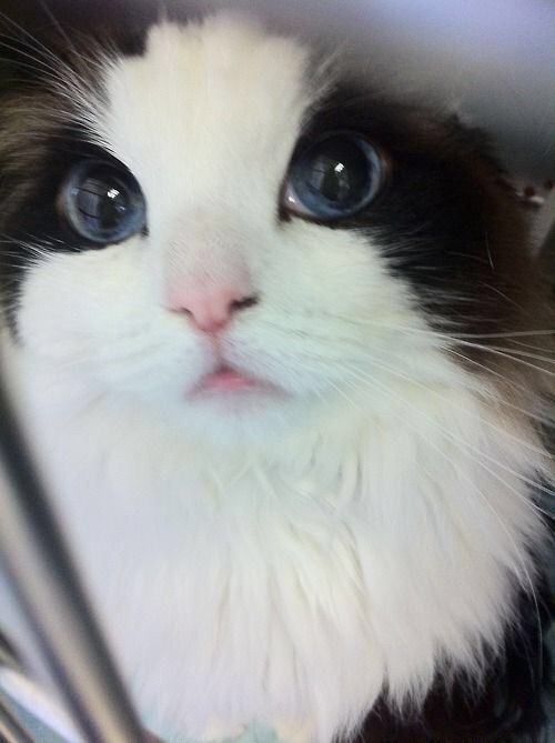 We Heart It 経由の画像 https://weheartit.com/entry/150939447 #cat #postthewholepicture