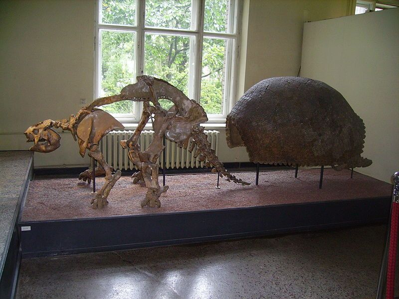 glyptodon a relative of armadillos that lived during the pleistocene epoch it was