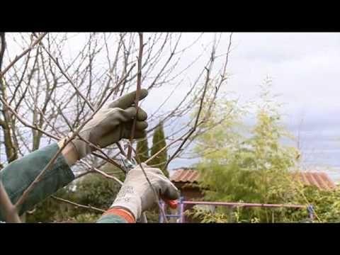 Apfelbaumschnitt WDR Daheim+Unterwegs 17.02.11 - YouTube