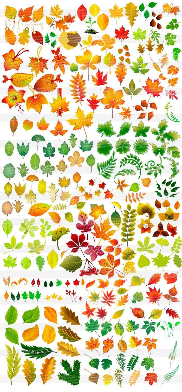 もみじ・楓・葉っぱ | デザイン資料 | pinterest | 葉っぱ、フラワー、絵