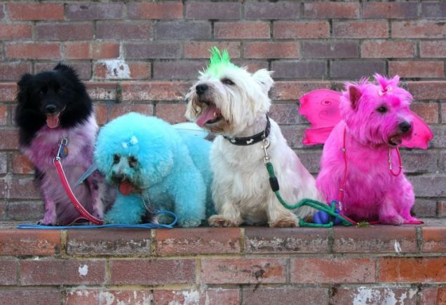 Towie Fanatic Gives Her Dogs Fur Jazzles And Dyes Them Pink Dogs