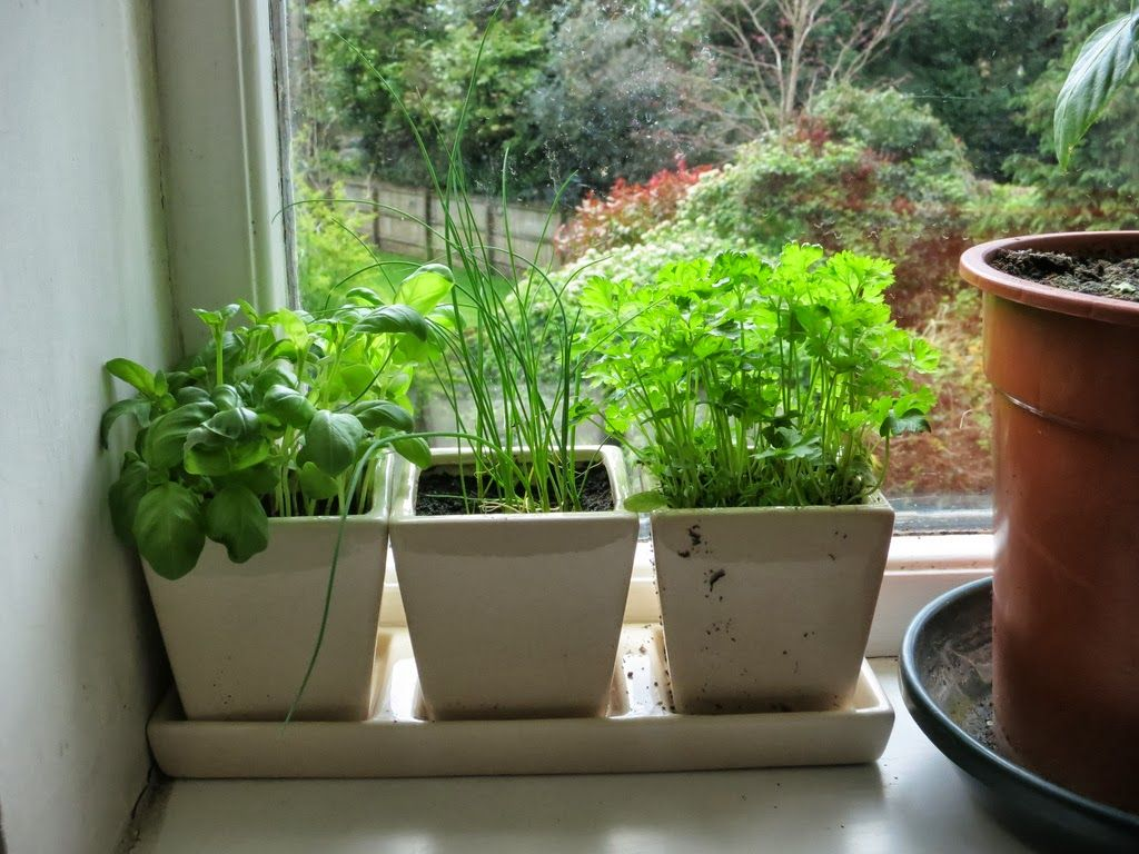 14 Diy Mini Herb Garden To Instantly Draw Your Attention 400 x 300