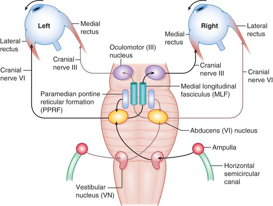Cn Vi Pathway Google Search Reticular Formation Map Screenshot Cranial Nerves