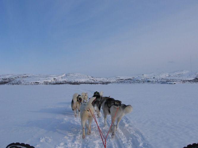 Schlittenhunde, Kirkenes Schlittenhunde, Hunde, Reiseziele