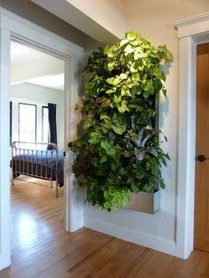 #plantsonwalls #verticalgardens