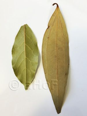 """Tej Patta, at right, commonly misnamed """"Indian Bay Leaf"""". Bay laurel leaves, shown left, taste completely different and are not interchangeable in an Indian recipe. If an Indian recipe calls for """"bay leaf"""", they mean Tej Patta."""