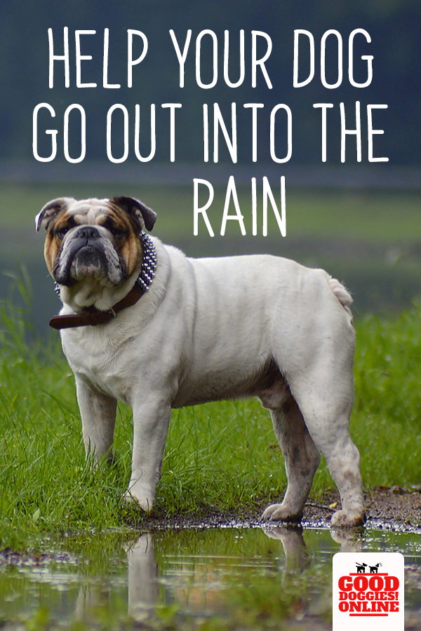 8 Tips To Help Your Dog That Won T Go Out In The Rain Dogs Basic Dog Training Your Dog