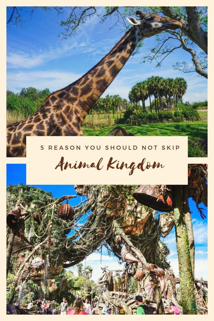 Visit Animal Kingdom at Walt Disney World: 5 Reasons you Should Not Skip #animalkingdom