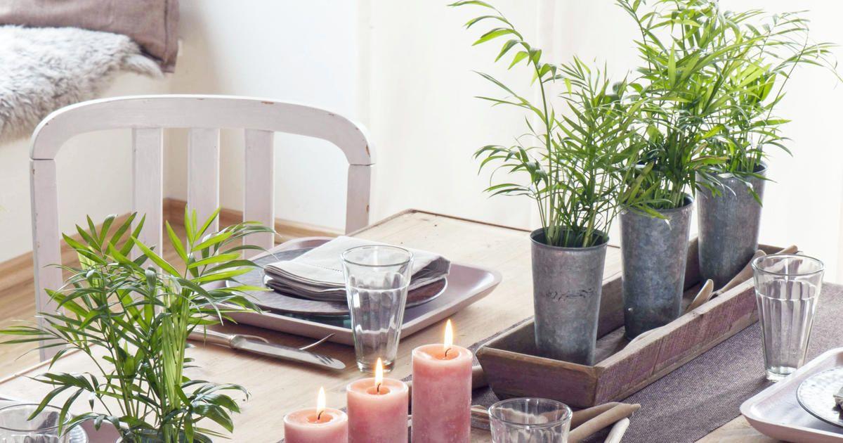 Die Bergpalme Chamaedorea Elegans Gehort Hierzulande Zu Den Beliebtesten Zimmerpflanzen Hier Erfahren Sie Wie Sie Die Mexi Zimmerpflanzen Bergpalme Pflanzen