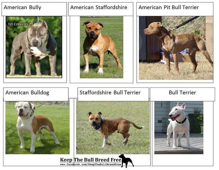 The Different Breeds That Are Most Commonly Referred As Pits