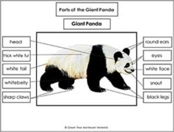 Giant Panda Printables: Label the parts of a Giant Panda 12 Parts ...