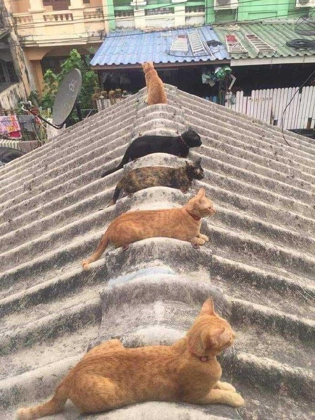 May We Offer Some Cat Loaves In These Trying Times 22 Fresh Loaves Animals Kittens Beautiful Cats