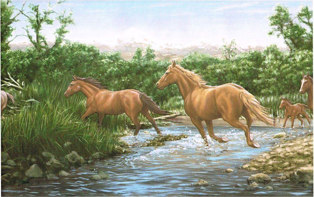 Running Horses Mountain River Wildlife Lodge Cabin Nature