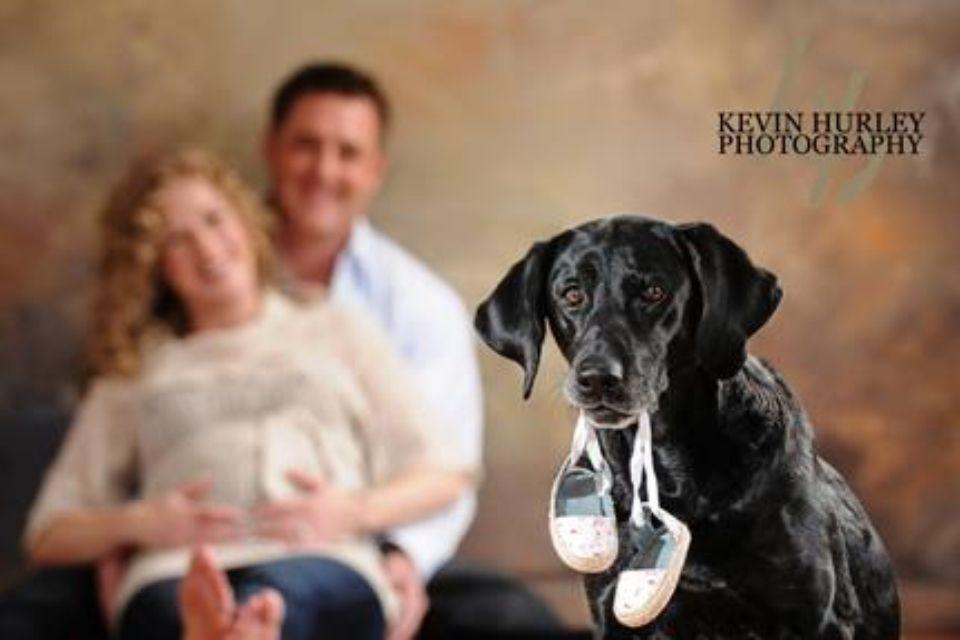 Precious C Kevin Hurley Photography Roanoke Va Labrador