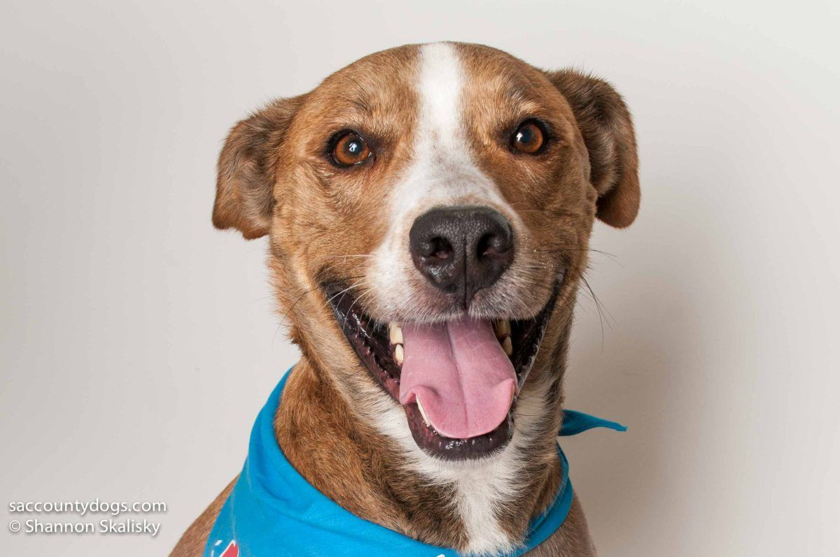 ID A674991 Age 6 years Gender neutered male Likes