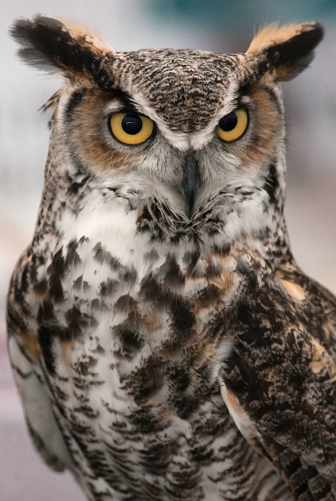 Falconry And Owls
