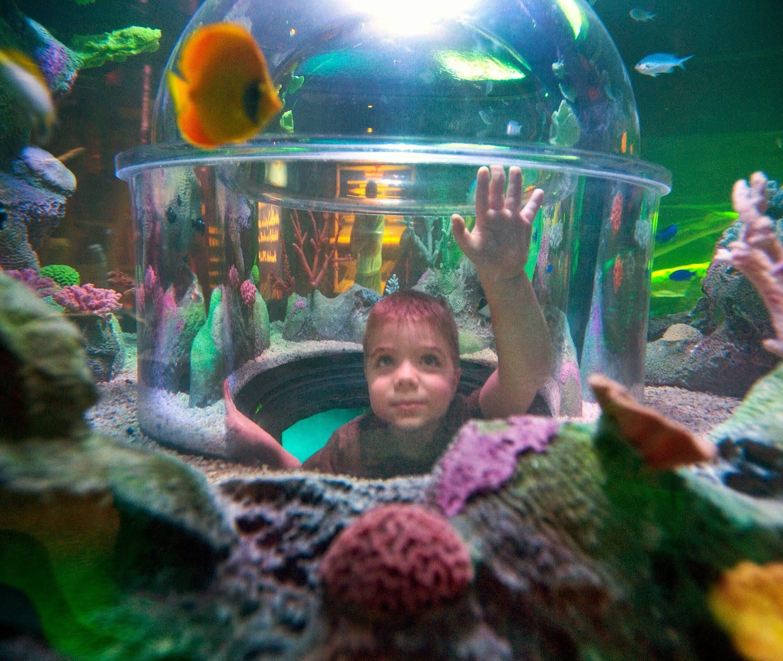 SEA LIFE Michigan - Family Fun coming to Great Lakes ...