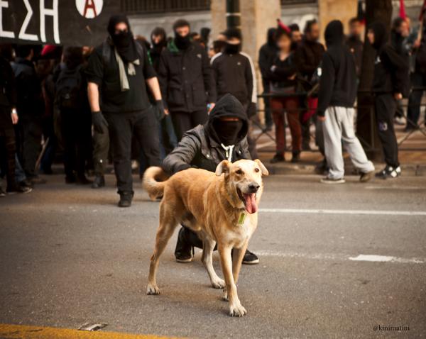 Loukanikos The Greek Anarchist Dog Photo Gallery