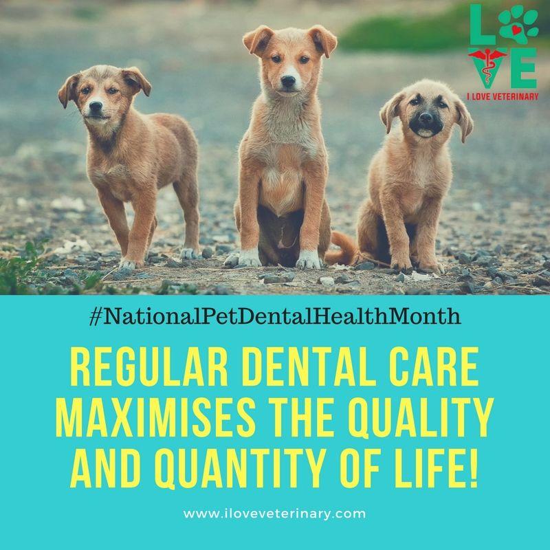 Happy National Pet Dental Health Month ) Pets, Training