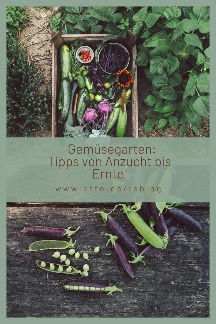 Gemüsegarten selbst anlegen. Ernte, Staudenbeet und Garten