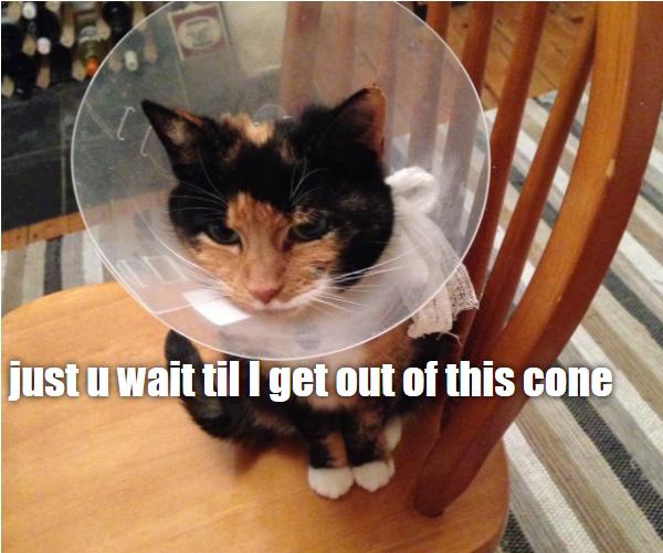 the best friend Cat memes, Cute cat memes, Funny cat memes