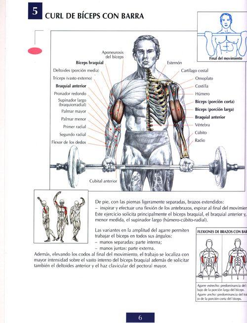 9 Ideas De Pectorales Ejercicios Para Pectorales Ejercicios Musculares Ejercicios