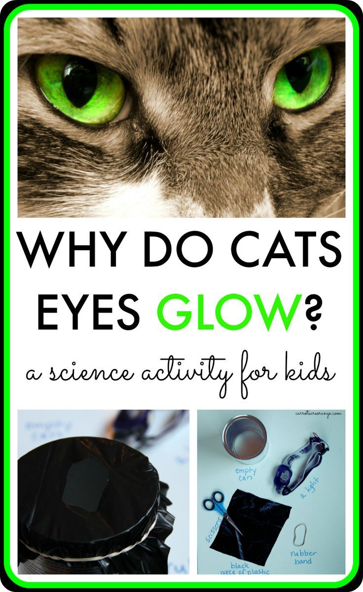 Why Do Cats Eyes Glow Boys Learning Pinterest Science Pixgood Com White Blood Cell Structure Diagram Of A This Easy And Intriguing Activity For Kids Examines The Will Draw Children Into Igniting Their Desire To Want Learn