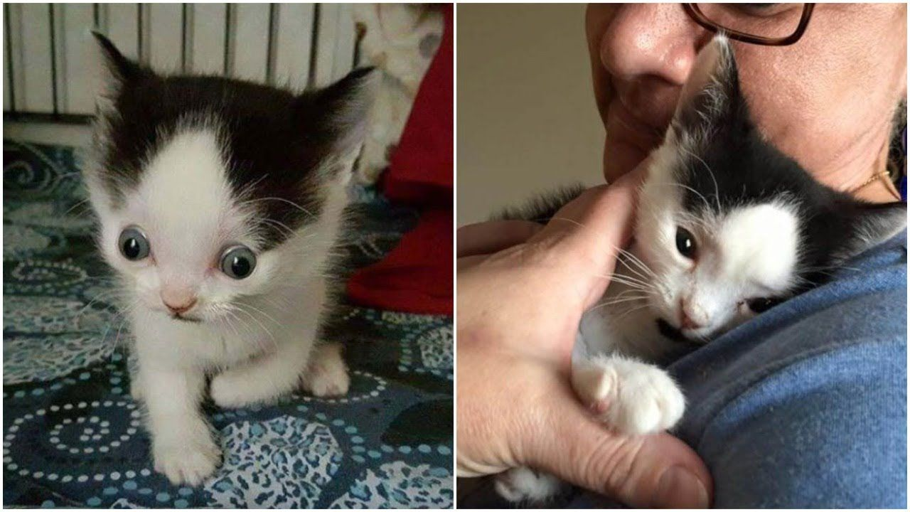 Poor Kitten Has Water On His Brain With Little Chance To Survive But Sh Cat Stories Kitten Cats