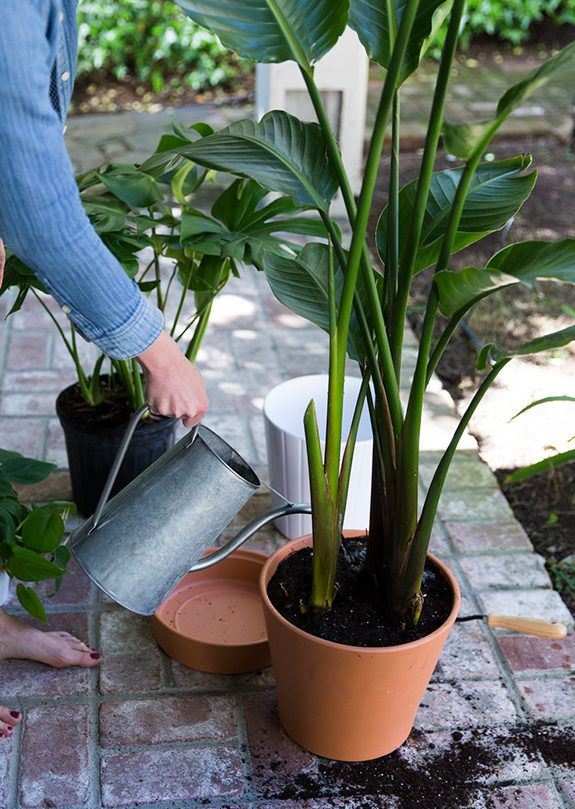 A Potted Plant Trick Plants, Drainage solutions, Backyard