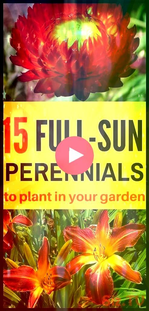 FullSun Perennials for Your Garden You don 39 t have to worry about not having any shade to offer your plants these perennials do best in full sun 15 FullSun Perennials f...