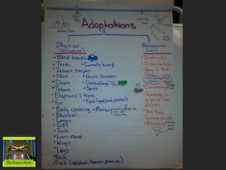 5th grade life science anchor chart for animal adaptations sorting behavioral and physical ada. Black Bedroom Furniture Sets. Home Design Ideas
