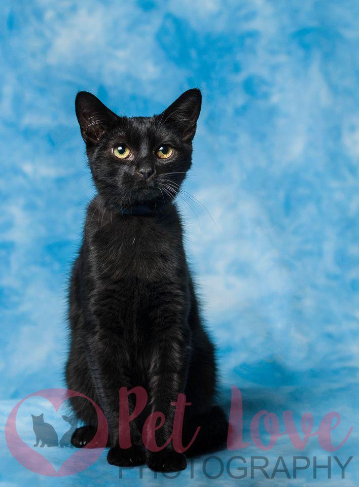Cat Portraits Cat photography, Cat portraits, Cats