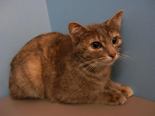 Lucy Oregon Humane Society Cute Animals Cat Adoption Humane Society